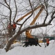 Обрезка веток деревьев в Караганде фото