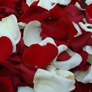 Лепестки роз купить фото