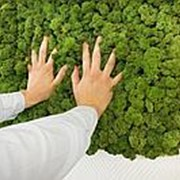 Вертикальное озеленение мхом фото