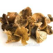 Готовое технологическое условие для сушеных грибов фото