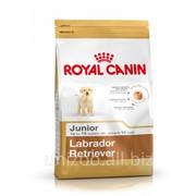 Сухой корм для собак Royal Canin Labrador Junior 33 (Роял Канин Лабрадор Джуниор) 1 кг фото