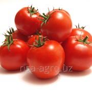 Корневая обработка помидор NPK 25-5-5 кг фото