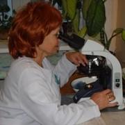Проведение лабораторных анализов продуктов питания фото