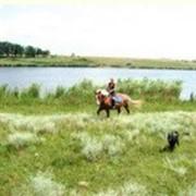 Конные прогулки. Одесская область, Великодолинское, Большая Долина фото