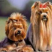 Стрижка собак и котов. фото