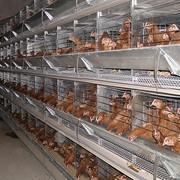 Разработка оборудования для птицеводства фото