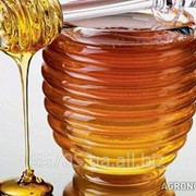 Куплю мед фото