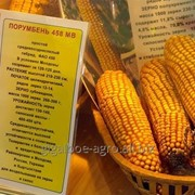 "Кукуруза гибрид ""Порумбень 458"" фото"