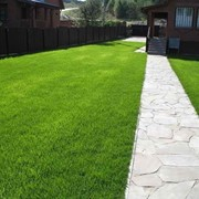 Посев газонной травы фото