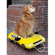 Зоотакси Taxi Mango фото
