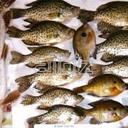 Доставка рыбы фото