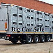 Полуприцеп скотовоз 98271 для перевозки свиней (овец) поверхностями фото