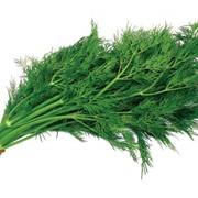 Продажа свежей зелени фото