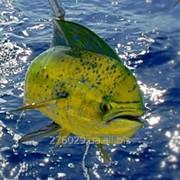 Тур рыбалка на Маврикии фото