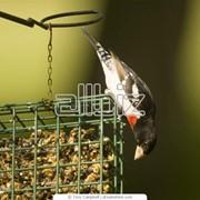 Оборудование для птицеводства Клетки для перепелов фото