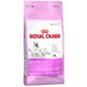 Корм для котов Royal Canin Babycat 0.4 кг фото