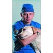 Ветеринарная служба фото