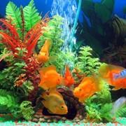 Дизайн и оформление аквариумов фото