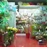 Стеллажи для цветочных салонов фото