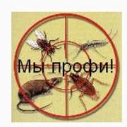 Дезинфекция помещений и дезинфекция квартир, уничтожение насекомых фото
