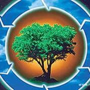 Мероприятия по охране окружающей среды фото