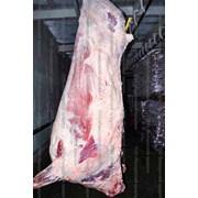 Мясо говядины в тушах промзабой любые объемы фото