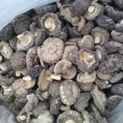 Гриб шиитаке сушеный фото