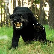 Чучело Пантера фото