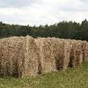 Корма для животных,заготовка кормов,производство кормов фото