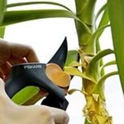 Уход За Комнатными Растениями Дома И В Офисе фото