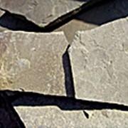 Песчанник серый фото