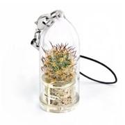 Орора кактус Minicactus брелок с живым растением фото