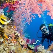 Дайвинг в лучших акваториях мира фото