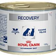 Royal Canin 195г конс. Recovery Влажный корм для собак и кошек в восстановительный период фото