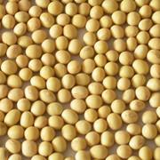Семена сои сорта УСХИ 6 элита фото
