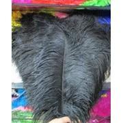 Перо страуса. Цвет Черный. Размер 45-50cм. (1шт.) ПС50-05 фото