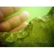 Подводное освидетельствование и осмотры фото