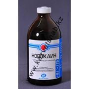 Новокаин 0,5% 100мл для применения в ветеринарии фото