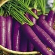 Концентрированный сок фиолетовой моркови фото