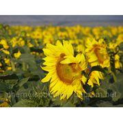 Отработанное растительное масло,куплю в Черновцах фото