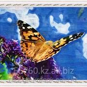 Алмазное рисование - Прекрасная бабочка - 40х50см фото