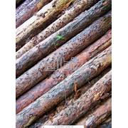 Шпалерные столбы - Оборудование для садоводства и виноградарства фото