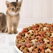 Корм для котят фото