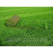 Рулонный газон (с дерниной рулонного газона) фото