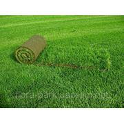Газон посівний, рулонний фото