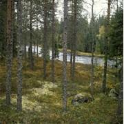 Инвентаризация лесов фото