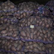 Продам картошку мелким и крупным оптом фото