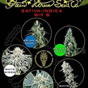 Семена конопли Sativa/Indica Mix B фото