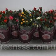 Роза Бомонд микс -- Rose Beau Monde mixed фото
