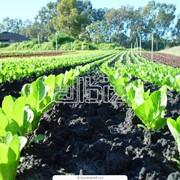 Выращивание кормовых культур фото